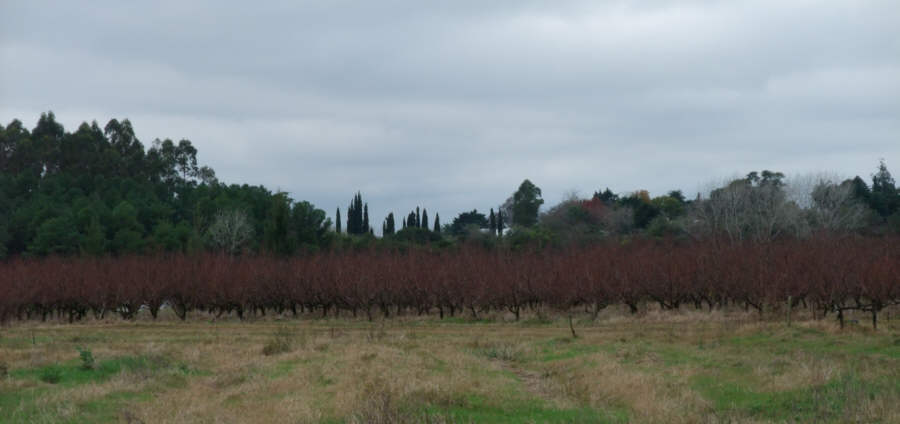 fruit & vineyard real estate property in Uruguay for sale></TD></TR>