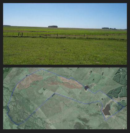 cattlericefarm uruguay