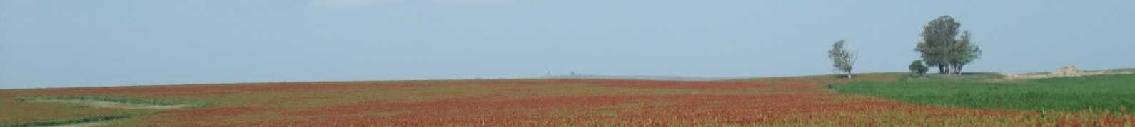 Uruguay Farmland