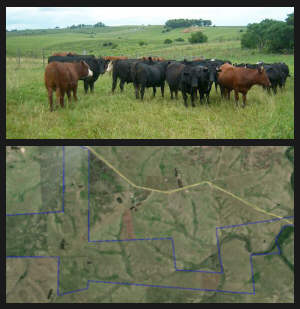 offer cattle ranch Lavalleja