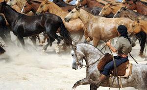 Pferde Uruguay